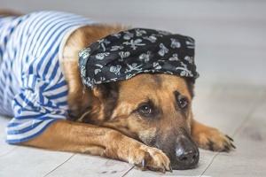 Забрать сейчас: кошки и собаки из приютов, которые ищут новый дом