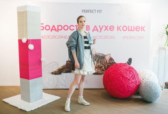В Москве открылись занятия котойогой по программе, составленной котами - Фото №3