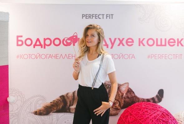 В Москве открылись занятия котойогой по программе, составленной котами - Фото №0