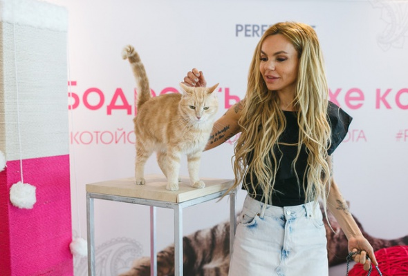 В Москве открылись занятия котойогой по программе, составленной котами - Фото №2