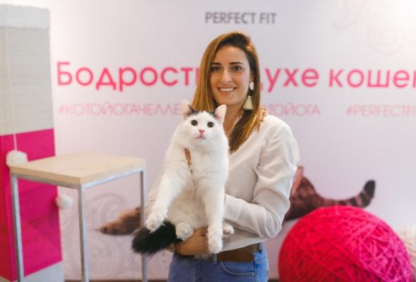В Москве открылись занятия котойогой по программе, составленной котами - Фото №1