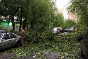 Из-за урагана в Москве повалило деревья