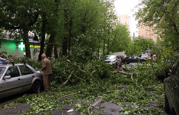 Из-за урагана в Москве повалило деревья (обновлено)