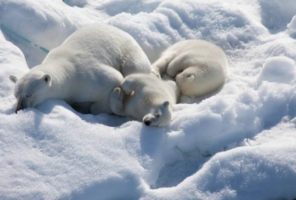 арктика - Фото №2