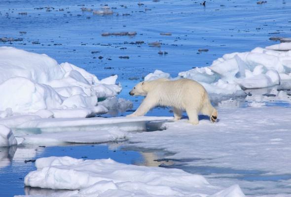 арктика - Фото №0