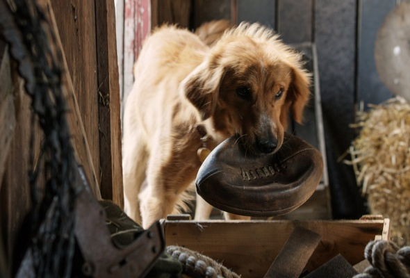 собаки - Фото №0