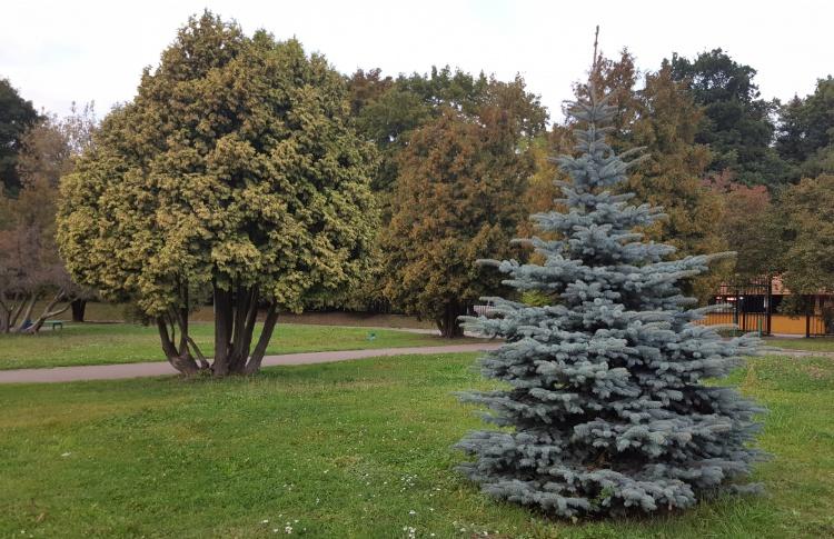 Из-за программы реновации в Москве могут исчезнуть 2,7 тысяч гектаров деревьев