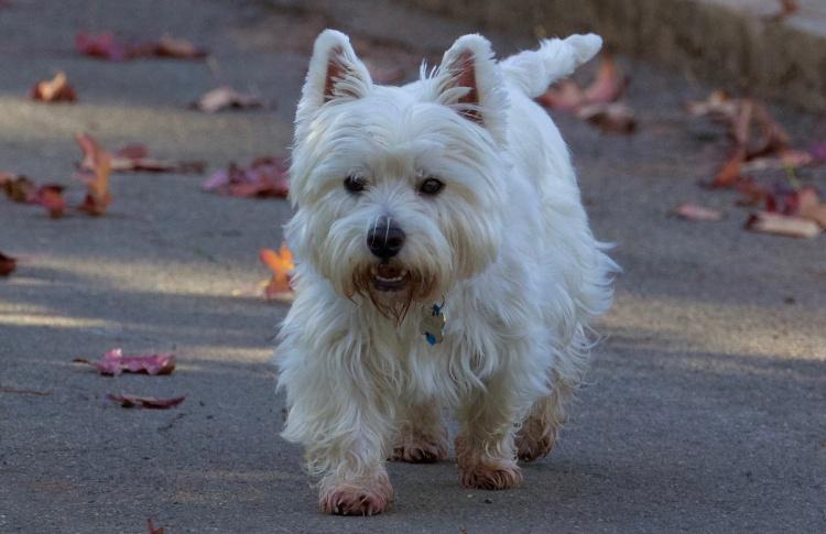 Вы нашли собаку на улице – что делать?