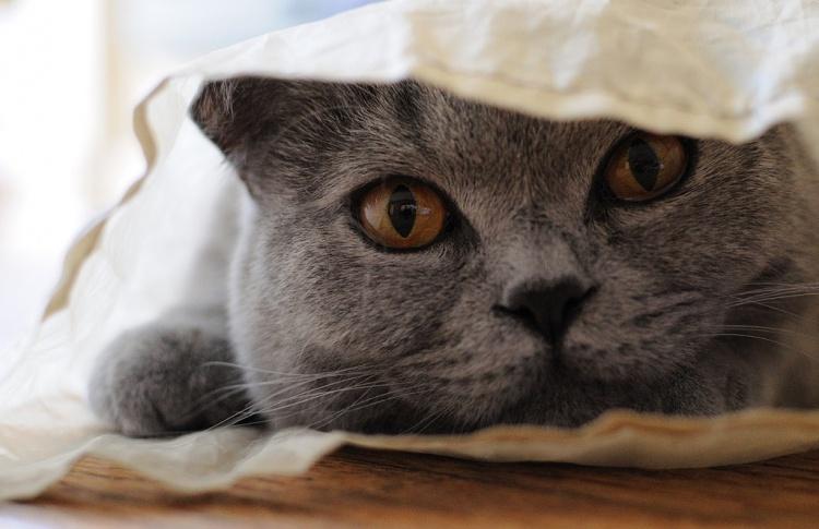 Кто в доме хозяин? Психология общения с животным