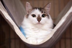 Ищут дом: кошки и собаки, которые могут стать вашими друзьями