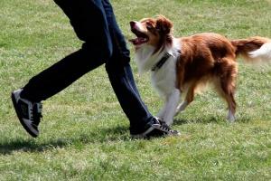 Можно ли позволять посторонним людям гладить вашу собаку?