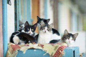 Как защитить кошку от гельминтоза?