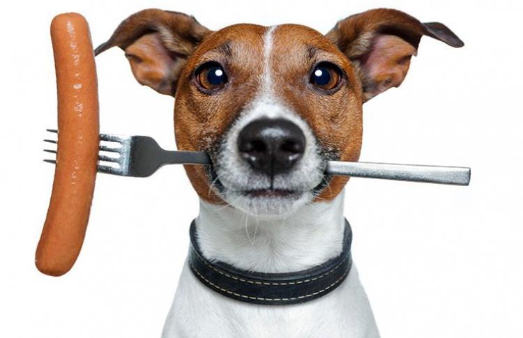 Как отучить собаку подбирать на улице?