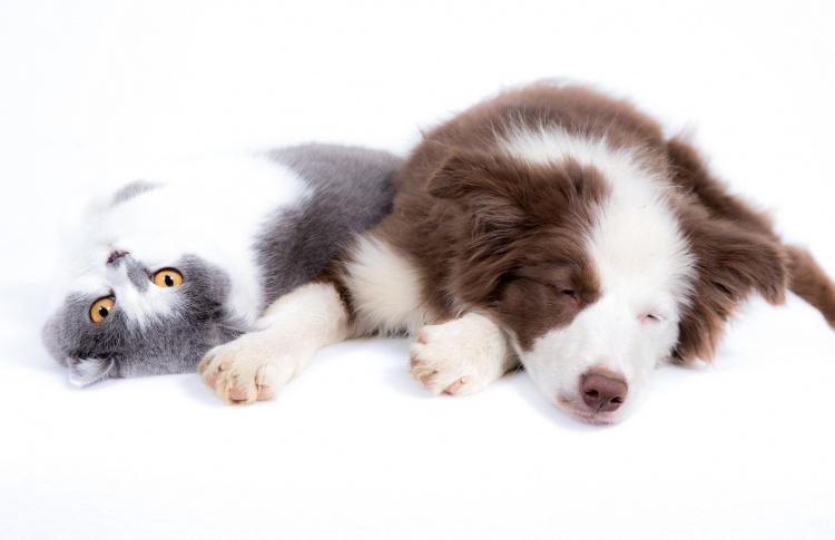 Как физиологически отличаются кошки от собак