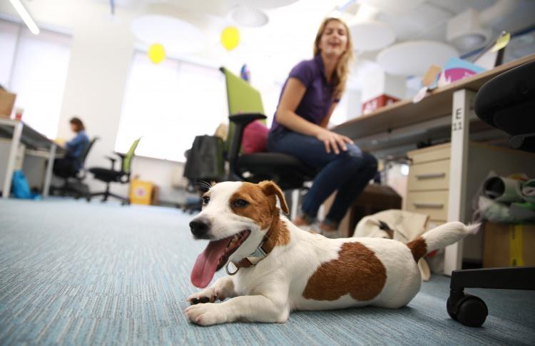 Питомцы снижают стресс офисных сотрудников