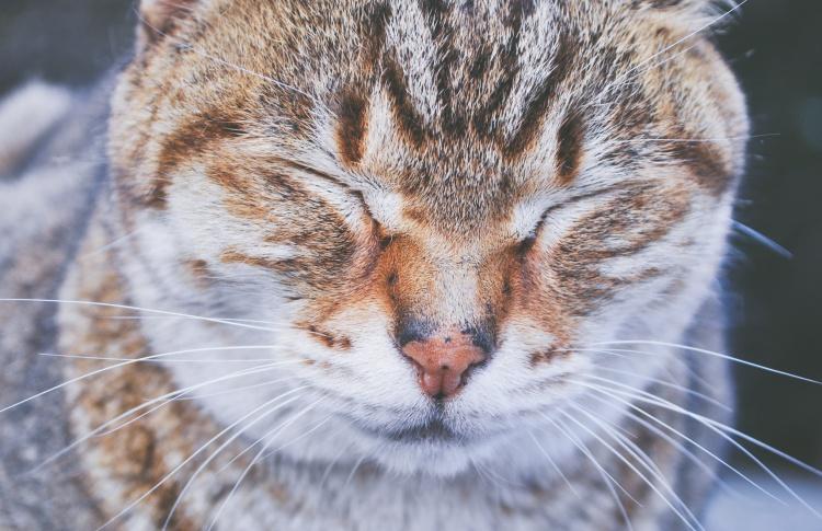 Кошки в Дарвиновском музее ждут хозяев