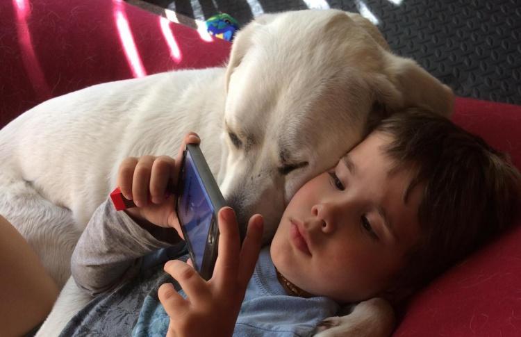 Друг и терапевт: Как лабрадор помогает мальчику справиться с приступами агрессии