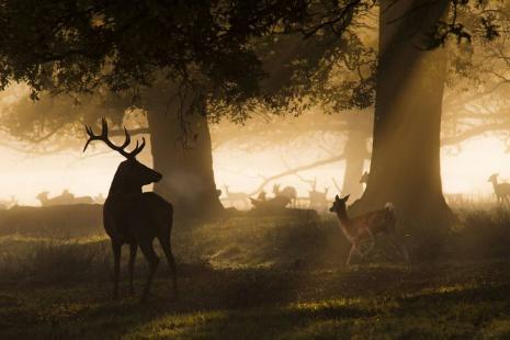 6 мест в Лондоне, где можно представить себя в «Игре престолов»