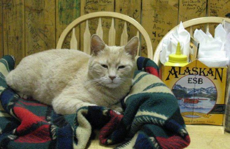 На Аляске умер кот Стаббс. 20 лет он был мэром Талкитна