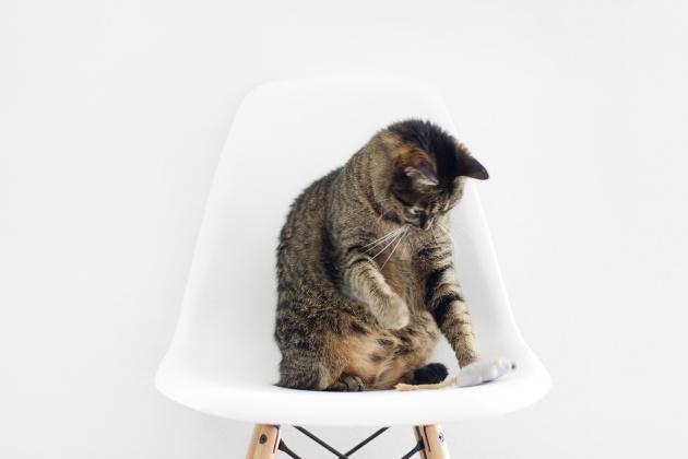 Пять приложений для игр с кошками