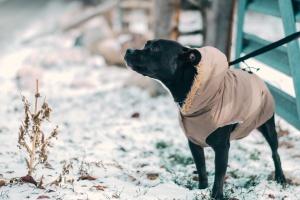 Что нужно знать о первом визите к ветеринару