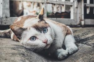 19 августа празднуется Всемирный день бездомных животных