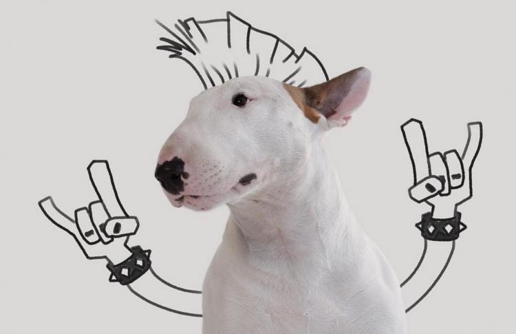 10 инстаграмов собак, вызывающих слезы умиления
