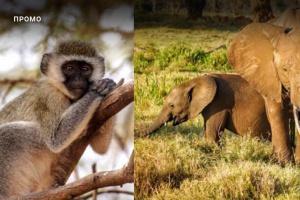 В Московском зоопарке расскажут о фауне Африки с помощью виртуальной реальности