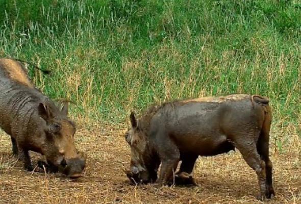 В Московском зоопарке расскажут о фауне Африки с помощью виртуальной реальности - Фото №4