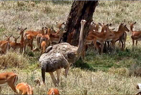 В Московском зоопарке расскажут о фауне Африки с помощью виртуальной реальности - Фото №3
