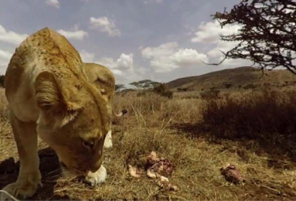 В Московском зоопарке расскажут о фауне Африки с помощью виртуальной реальности - Фото №2