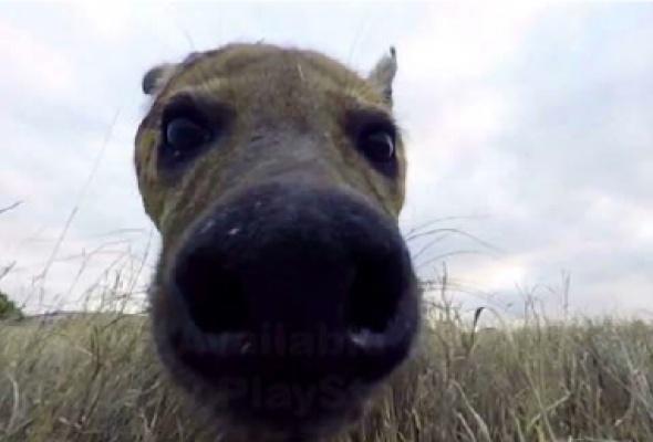 В Московском зоопарке расскажут о фауне Африки с помощью виртуальной реальности - Фото №1