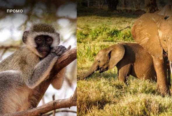 В Московском зоопарке расскажут о фауне Африки с помощью виртуальной реальности - Фото №0