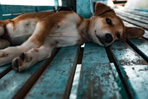 19 августа Кинополяна «Сокольников» примет 40 собак из приюта «Дубовая роща»