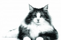 Впервые в Петербурге состоится Public talk о кошках