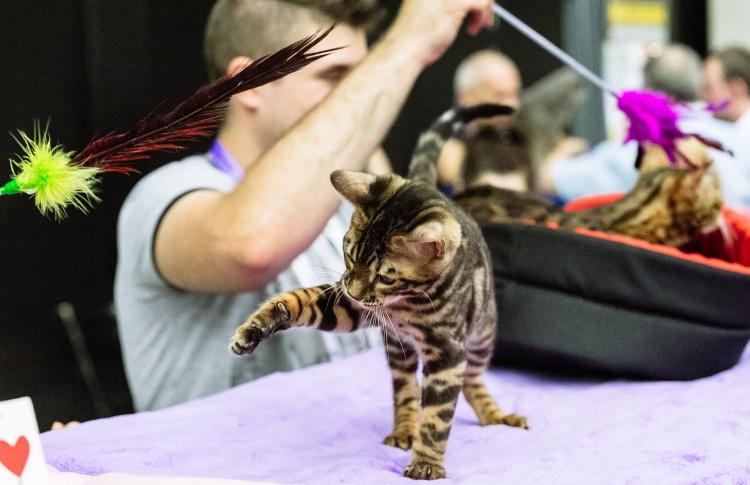 Выставка кошек двенадцати пород в «Сокольниках»