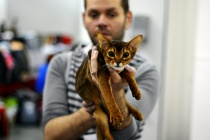 Международная выставка кошек в парке «Сокольники»