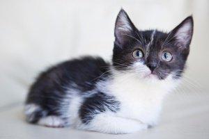 Коты и собаки, которым мы помогаем