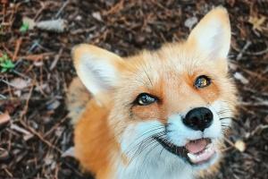 10 инстаграмов диких животных, которые стали домашними