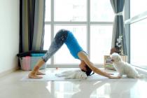 Благотворительный йога-класс в поддержку приюта, где содержатся 2500 собак и 100 кошек