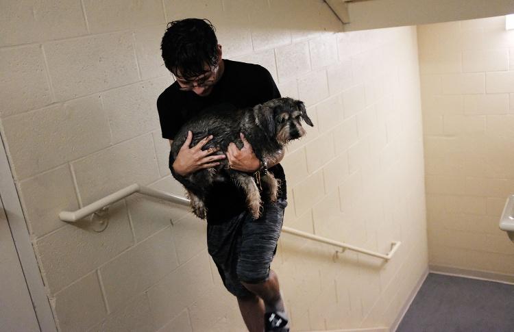 Как спасают животных во Флориде после урагана «Ирма»