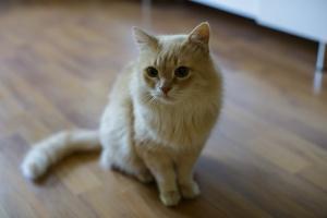 Три истории: животные, которые нашли свой дом