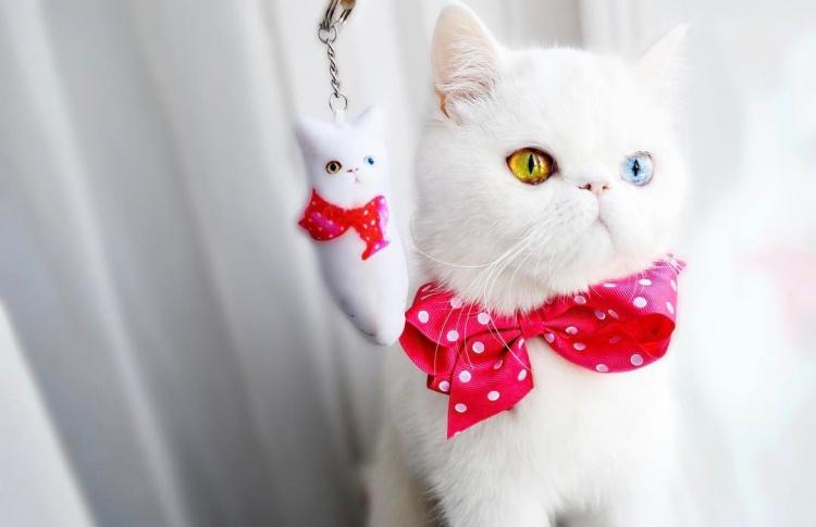 Инстаграм-когти: 11 аккаунтов необычных кошек
