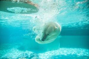 Животных из Московского зоопарка обучают добывать себе еду