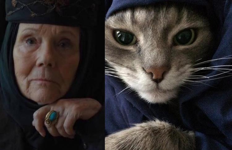 Новый тренд в интернете: кошки просят передать Серсее, что это были они