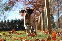 Благотворительная выставка собак «Счастье даром»пройдет в Кузьминках