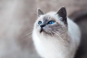 Гигиена глаз кошек и собак: советы по уходу