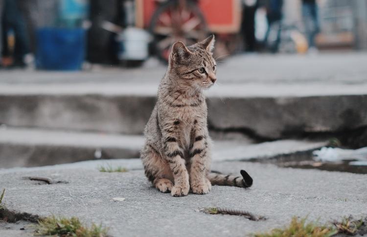 Помощник «Рэй»: первое предложение для помощи бездомным животным