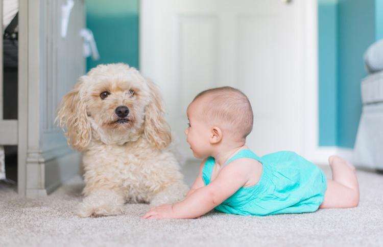 Что нужно знать о взаимоотношениях собаки и ребенка