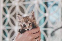 Выставка приютских кошек «Доброкот» в котокафе Catstory